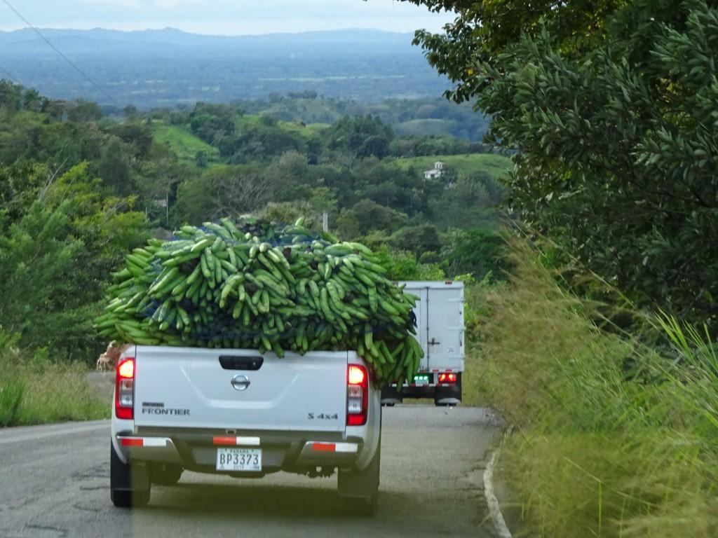 Plantain Truck, Boquete