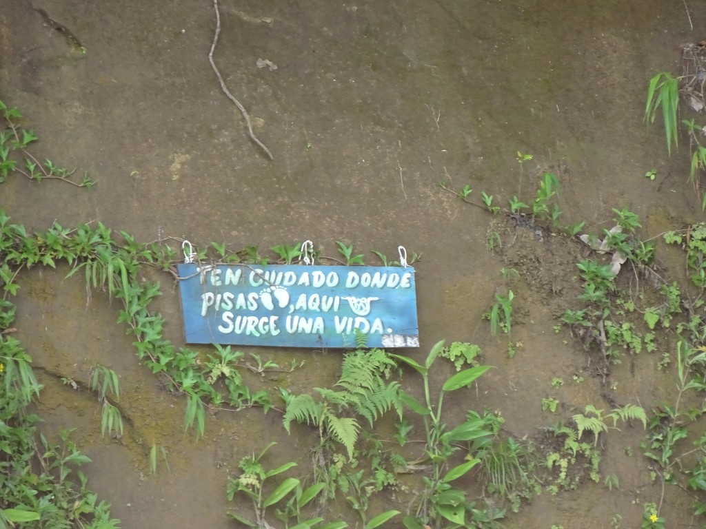 Escudo Veraguas