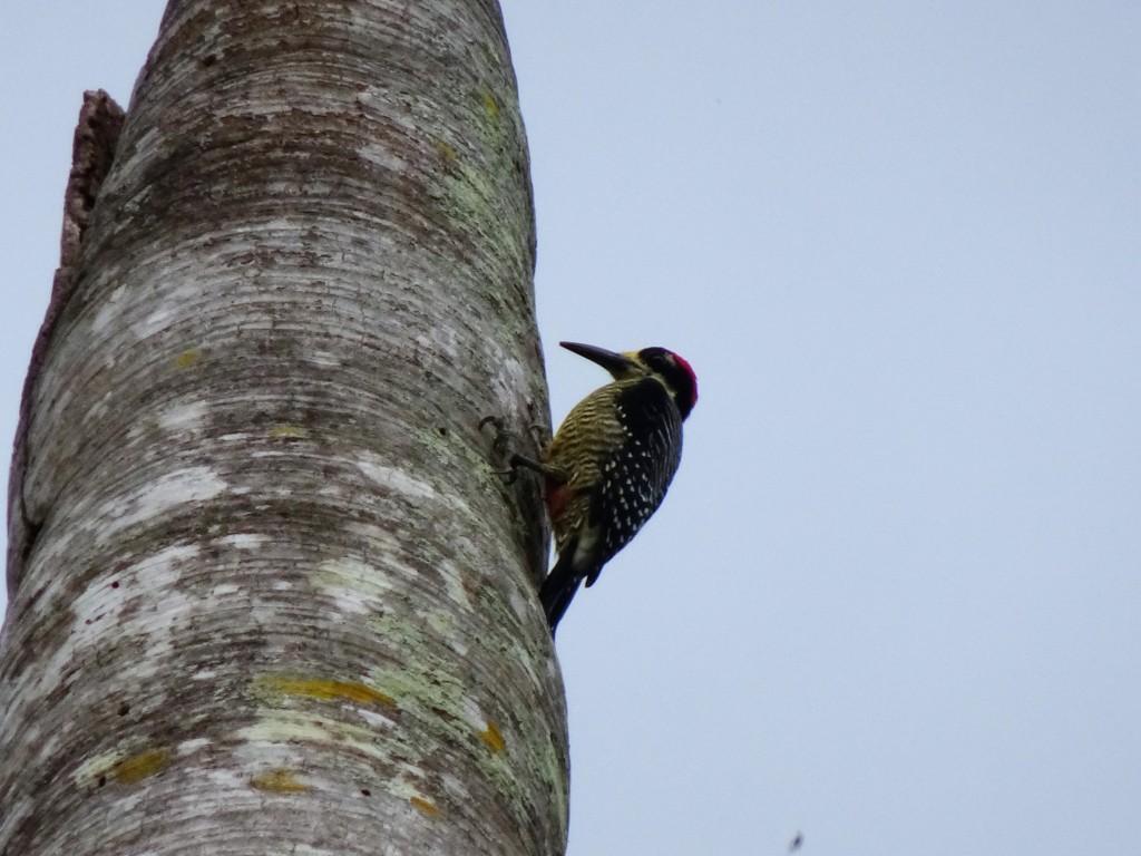Woodpecker-Shelter Bay Hike
